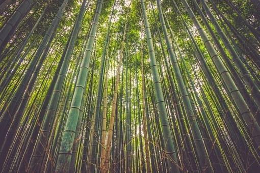 【画像】竹の形をしたグラスが美しすぎるwwww