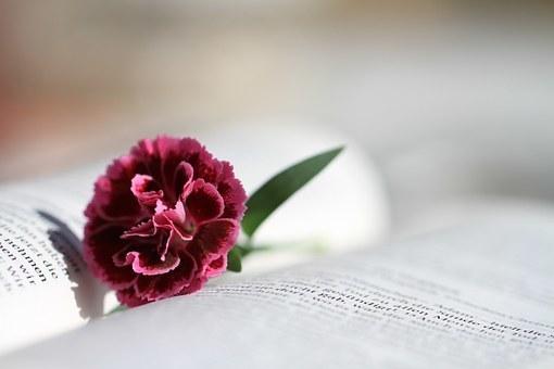 bible-888299__340.jpg