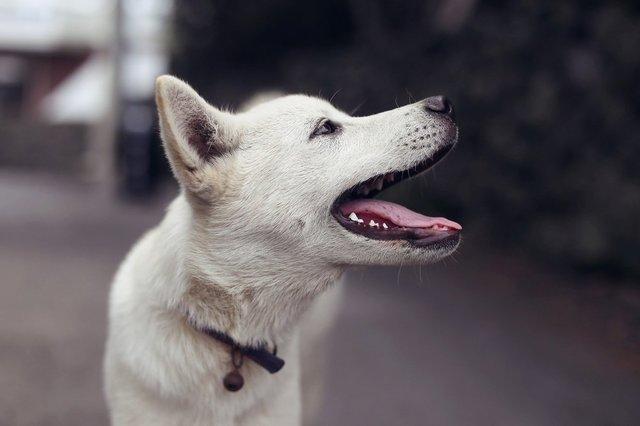 puppy-4298756_1920.jpg
