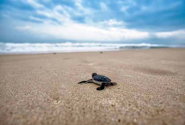 turtle-2201433_1920.jpg